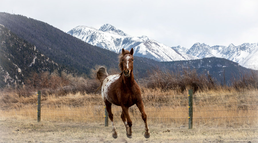 Horse and Rider photographer